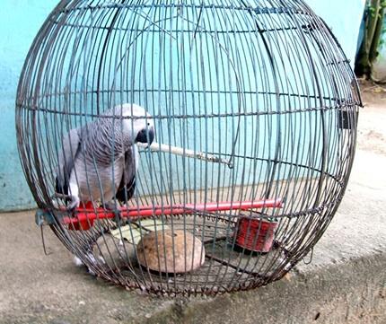 ph zoo parrot