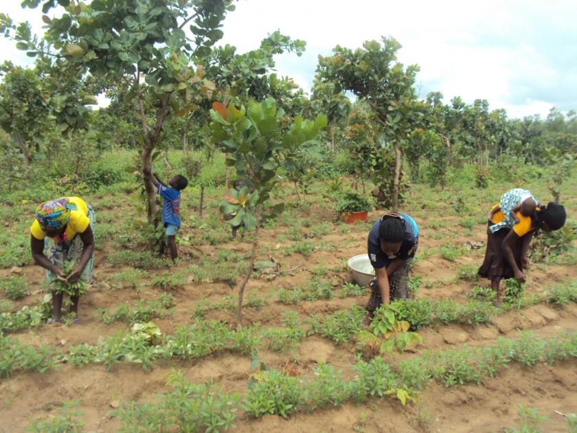 women-farmers-at-work-1020x765